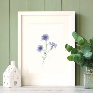 Cornflower watercolour and line-art print by Kerri Awosile in white frame with green paneling wall and eycalyptus