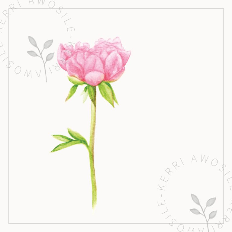 pink peony watercolour painting illustration by Kerri Awosile art, writing, design in the UK
