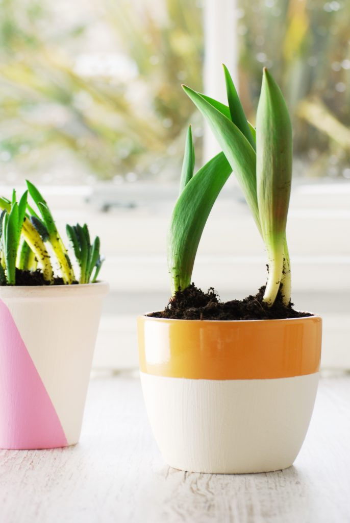 creative project for spring creativity with painted plant pots by Kerri Awosile
