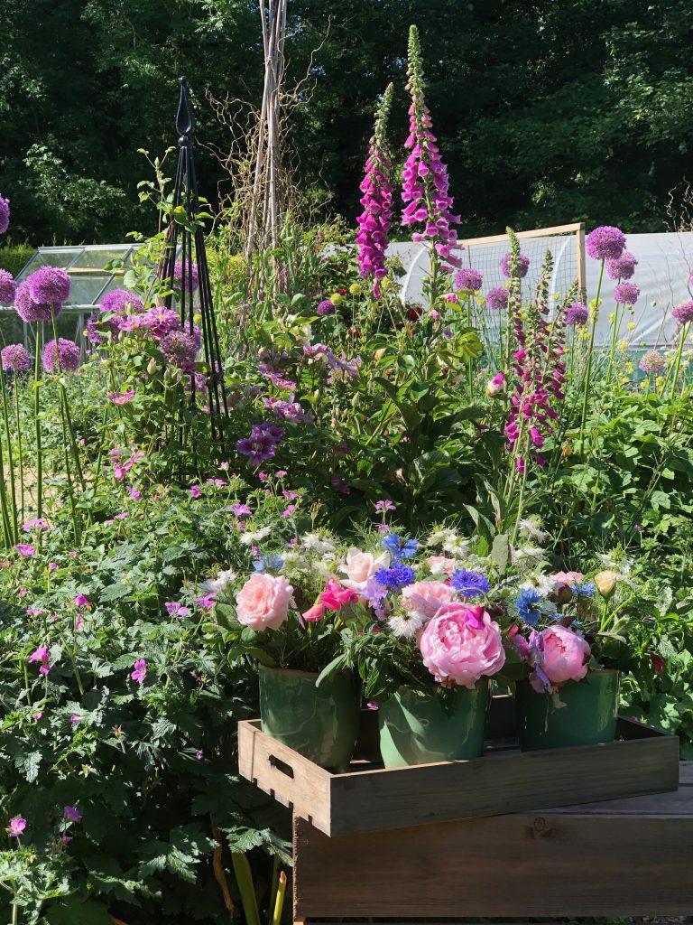 Eden Blooms garden