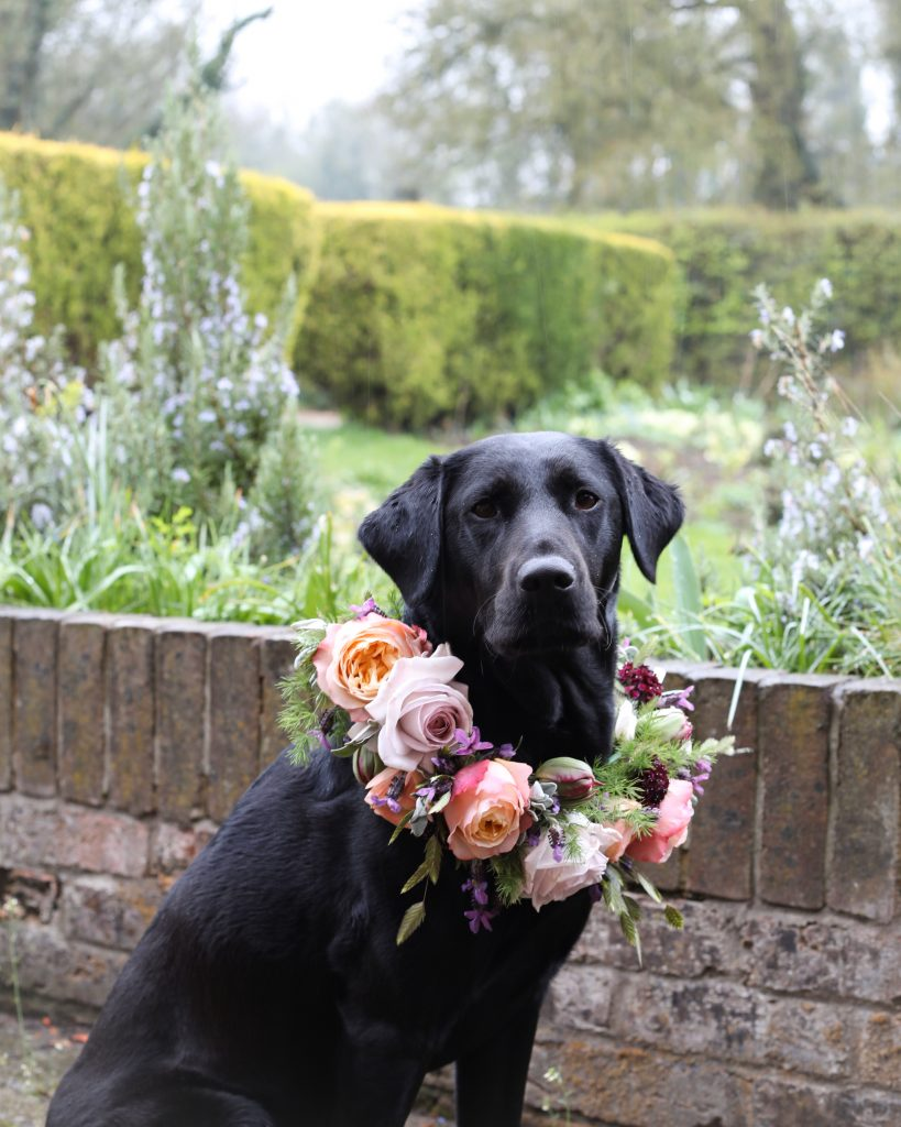 Hazel Shaw's dog with floral collar in beautiful garden