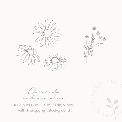 Chamomile illustrations by Kerri Awosile