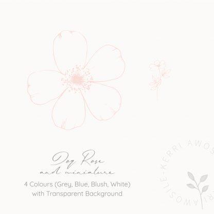 Dog Rose illustrations by Kerri Awosile