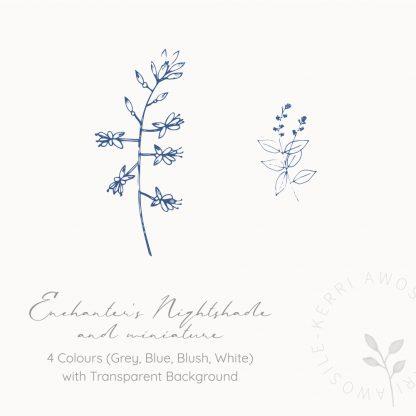 Enchanter's Nightshade illustrations by Kerri Awosile