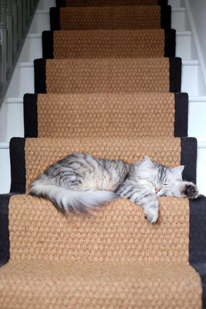 ceri olofson's cat, Mishka